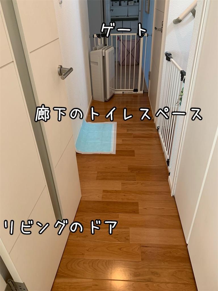f:id:taruto-rasuku_maaya:20210905164908j:image