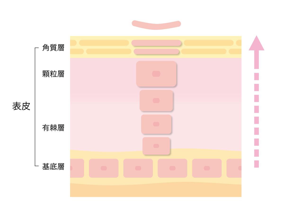 f:id:tashirochang:20210416113119j:plain