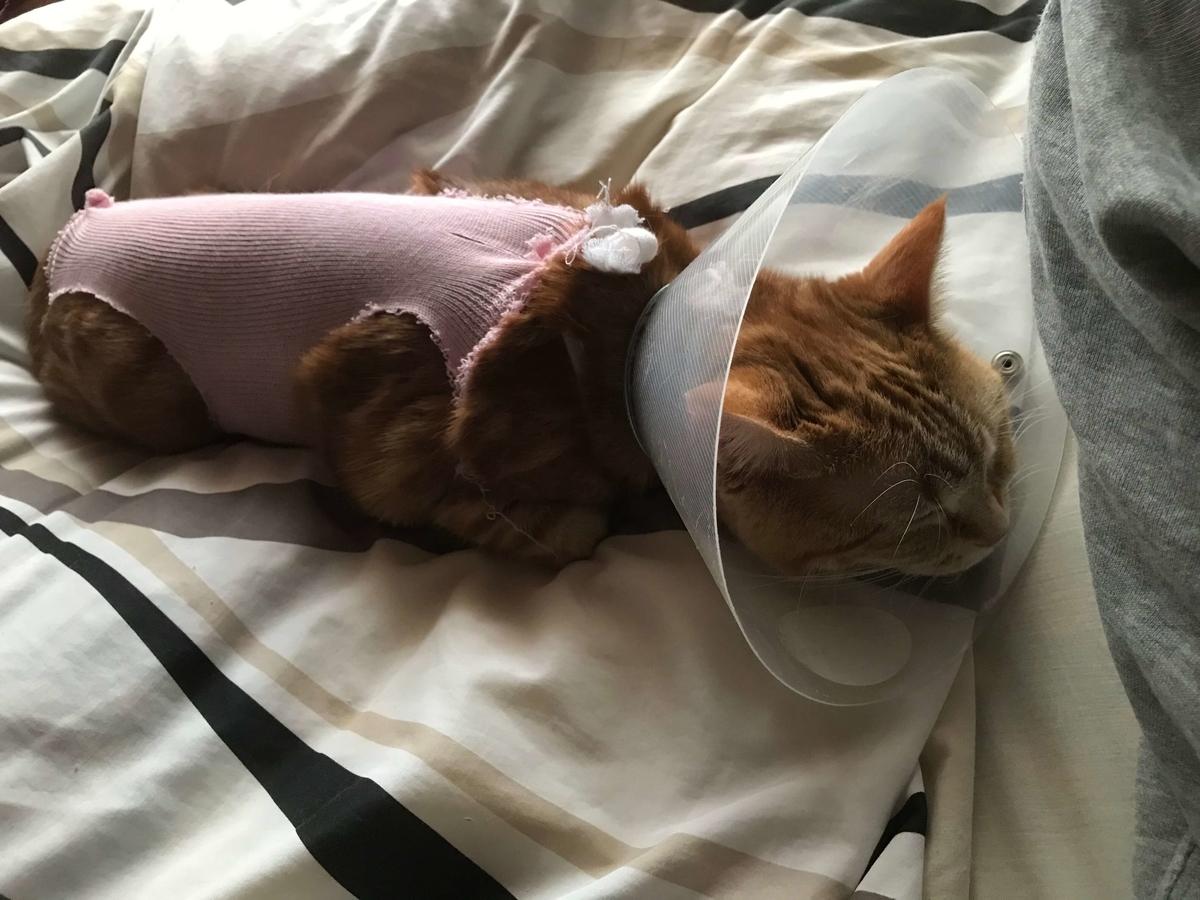 猫 避妊手術後