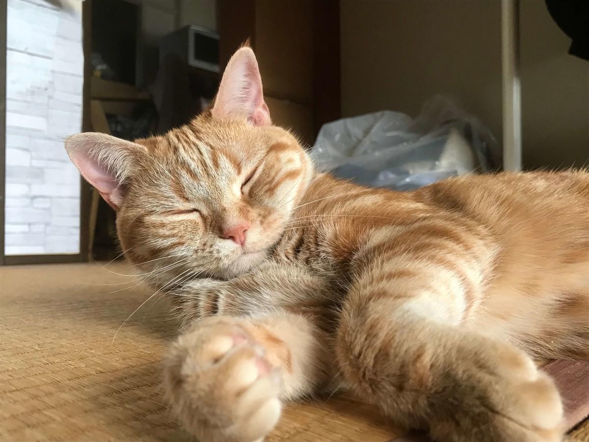 死んだように寝る猫