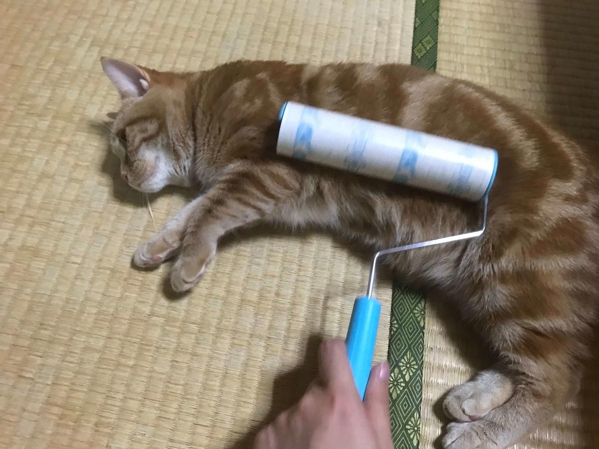 猫 コロコロ