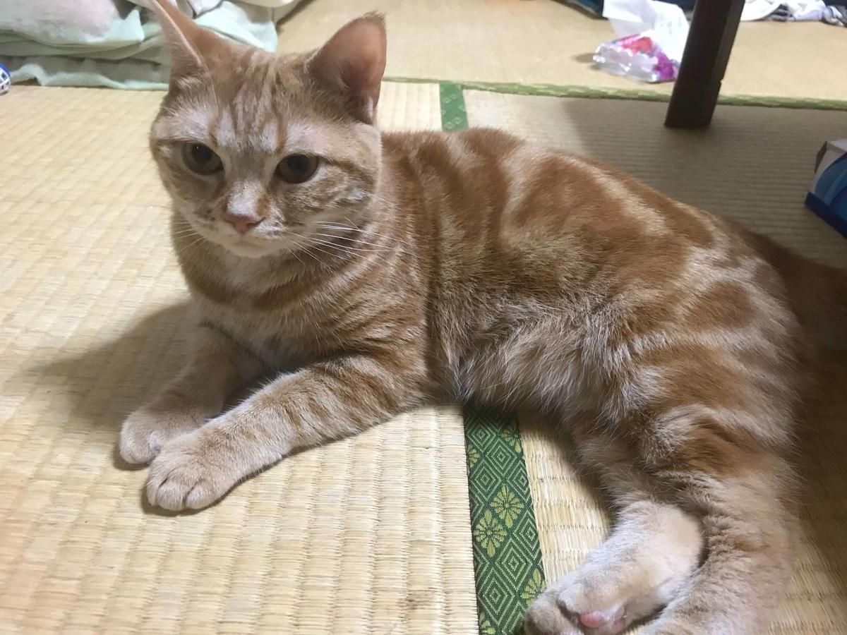 コロコロマッサージが終わった猫