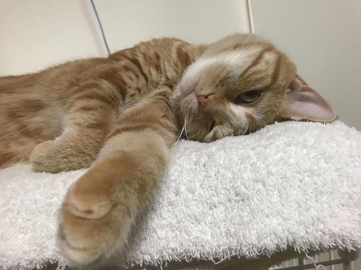 猫 避妊手術後 性格
