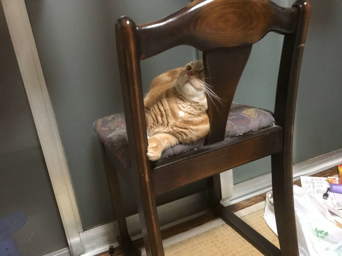 目を開けて寝る猫