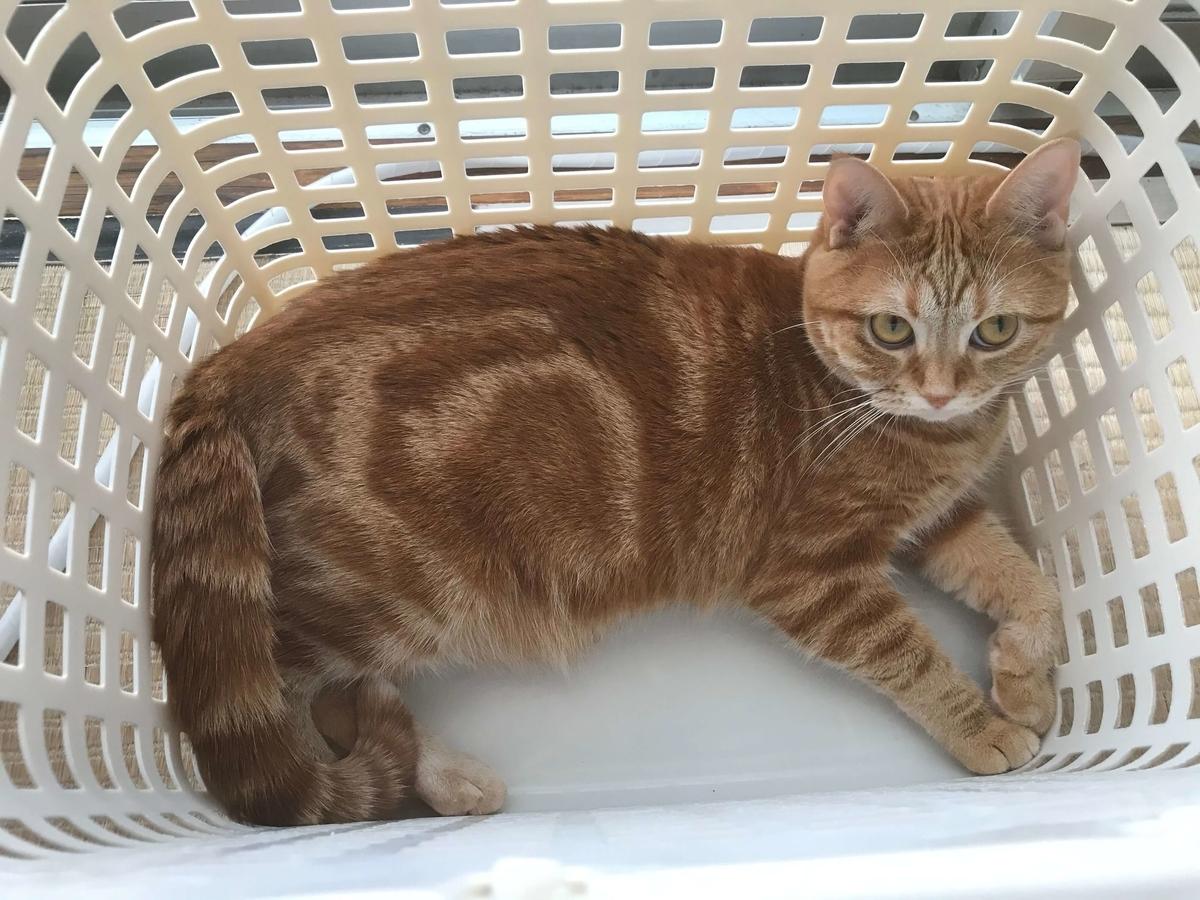 猫 洗濯カゴ