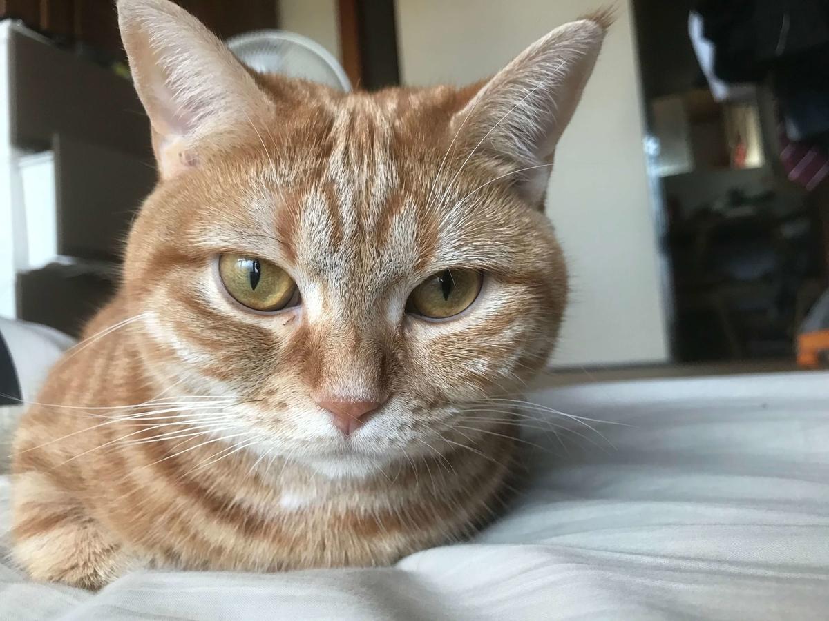 猫 モーニングルーティン