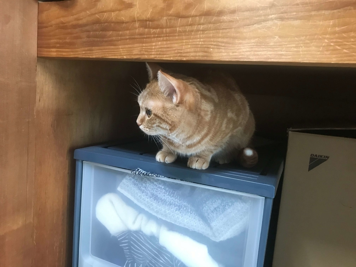 猫 来客時 逃げる