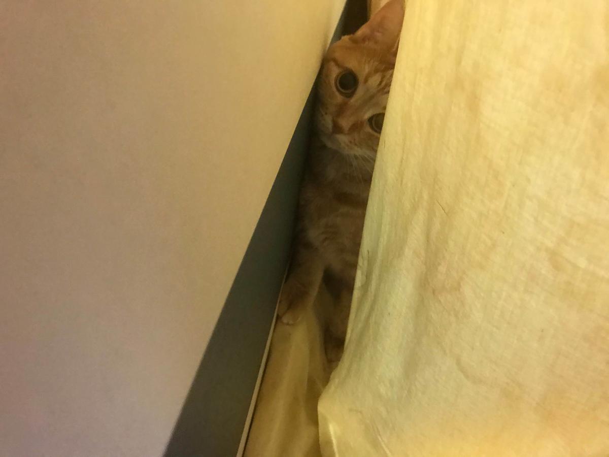 猫 来客時 隠れる