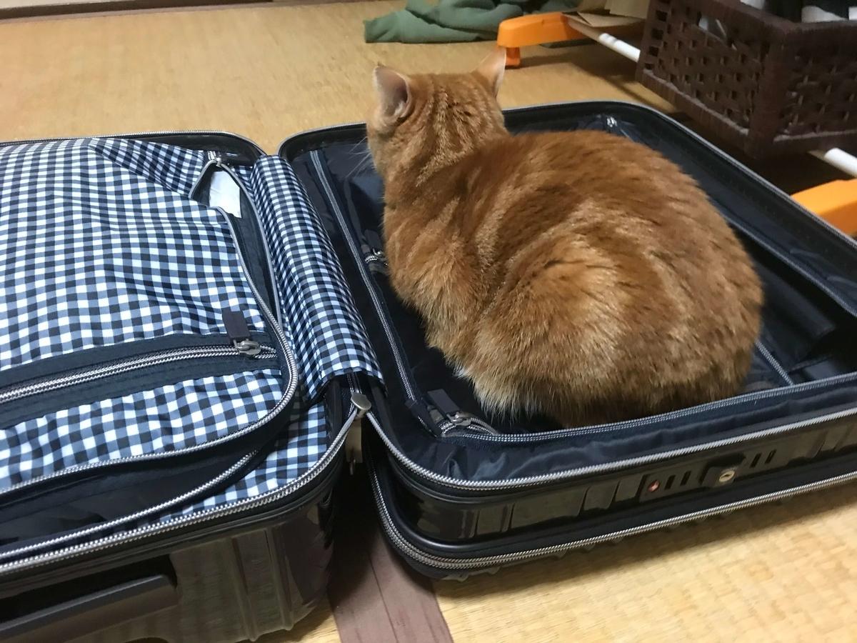 猫 行かないでアピール スーツケース