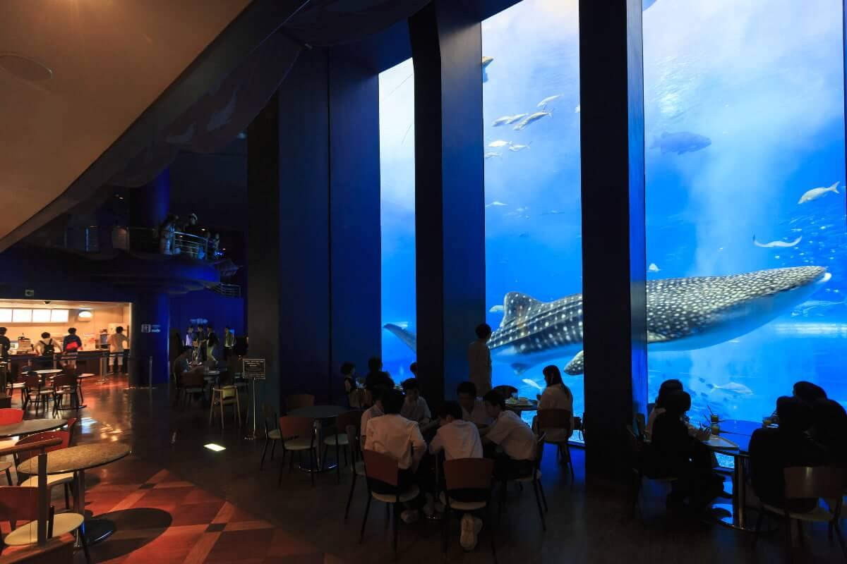 美ら海水族館 オーシャンブルー