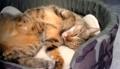 [cat]お気に入りの寝床