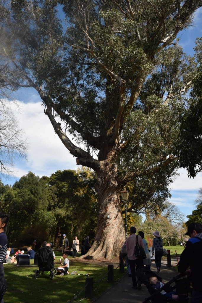 f:id:tasmaniandevillaketekapo:20161010083538j:plain