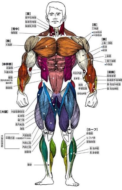 名前 二の腕 筋肉