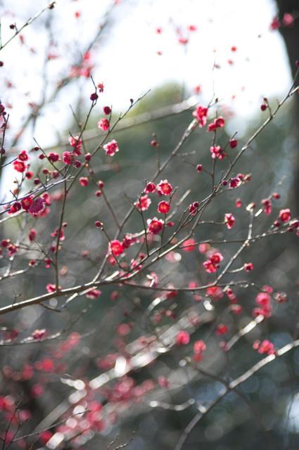 f:id:tateisu:20090223145629j:image