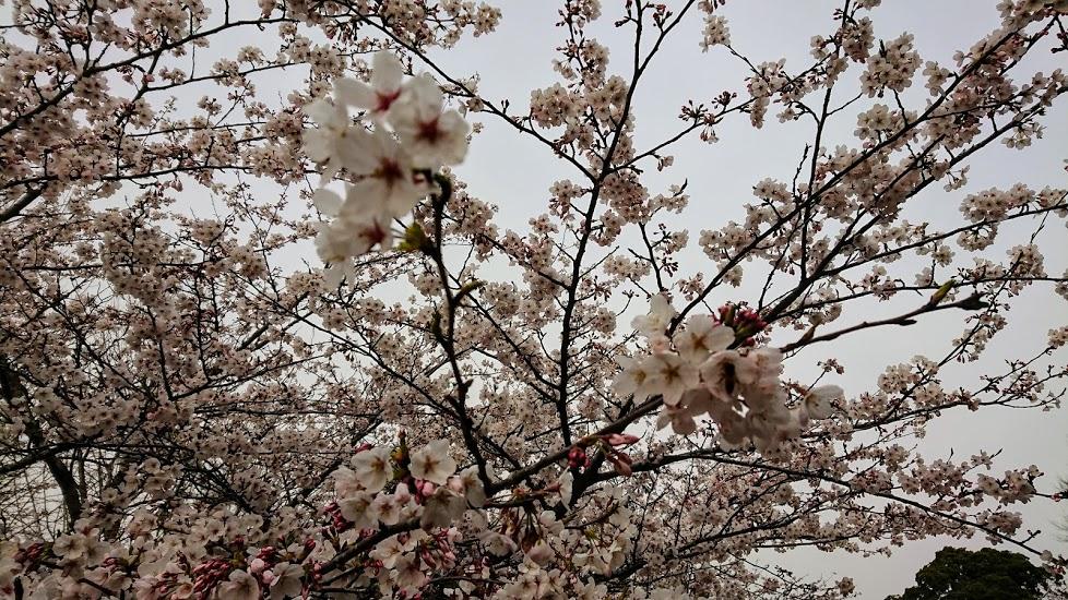 f:id:tateyama-lohas:20190505155758j:plain