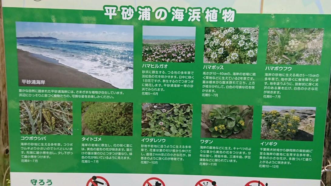 f:id:tateyama-lohas:20190511163958j:plain