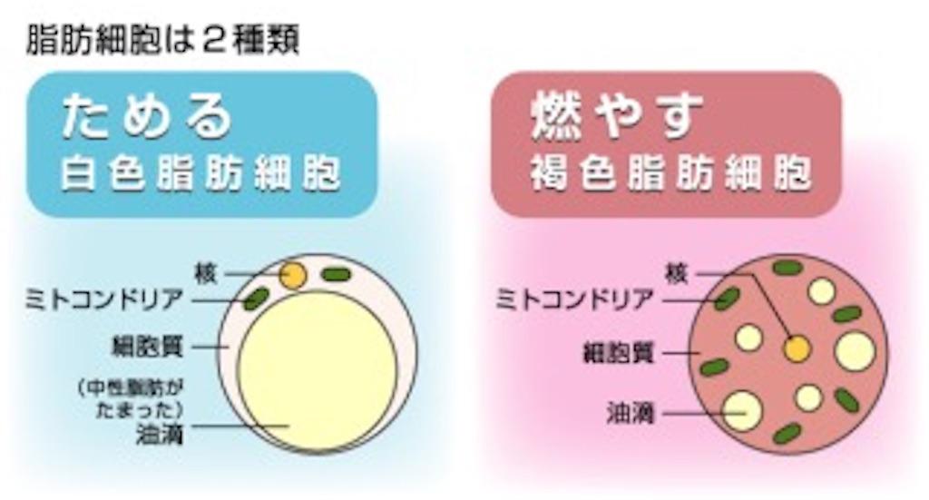 f:id:tatsuki52510:20181114165601j:image