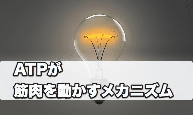 f:id:tatsuki_11_13:20180812101347p:plain