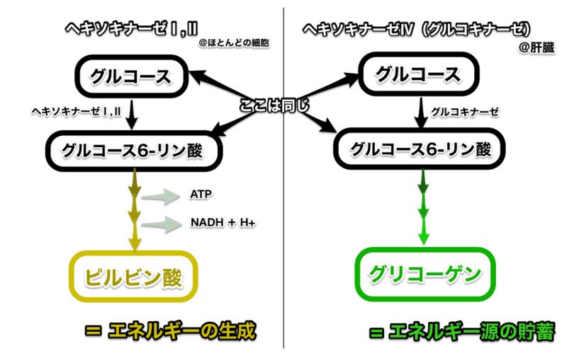 f:id:tatsuki_11_13:20180813234834p:image