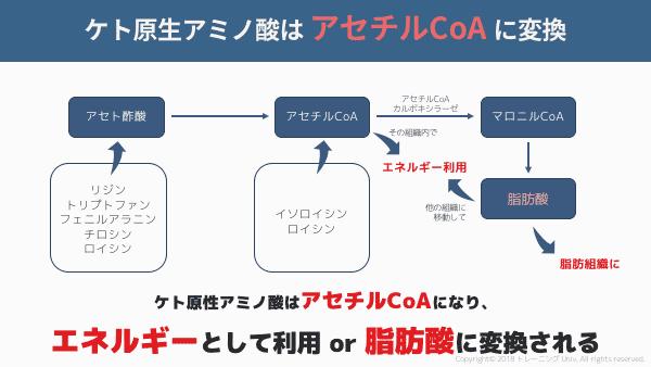 ケト原生アミノ酸はアセチルCoAに変換される