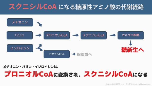 スクニシルCoAからクエン酸回路に入ってオキサロ酢酸になる糖原性アミノ酸