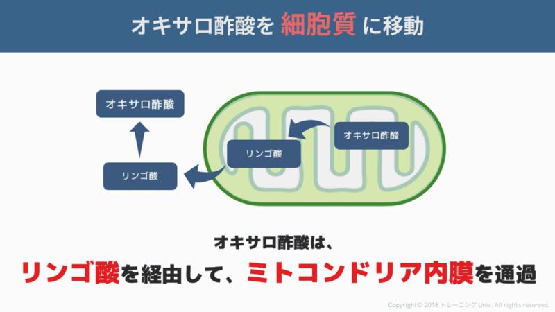 f:id:tatsuki_11_13:20180824105451p:image