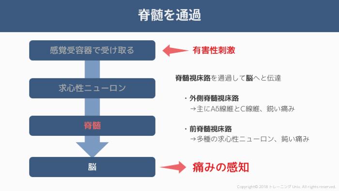 f:id:tatsuki_11_13:20181011022605p:image