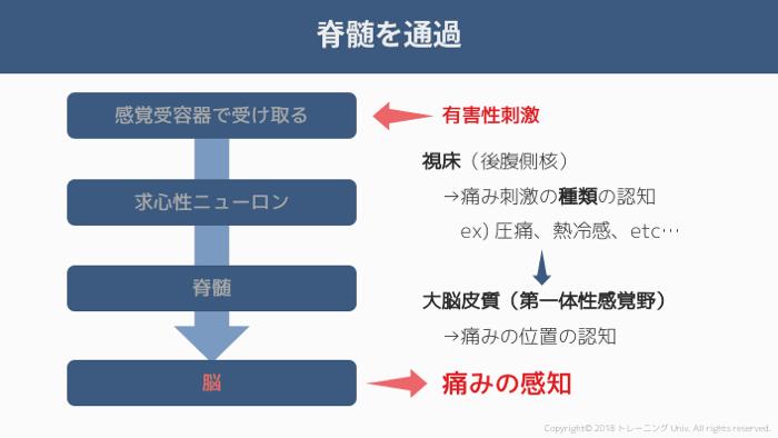 f:id:tatsuki_11_13:20181011022610p:image