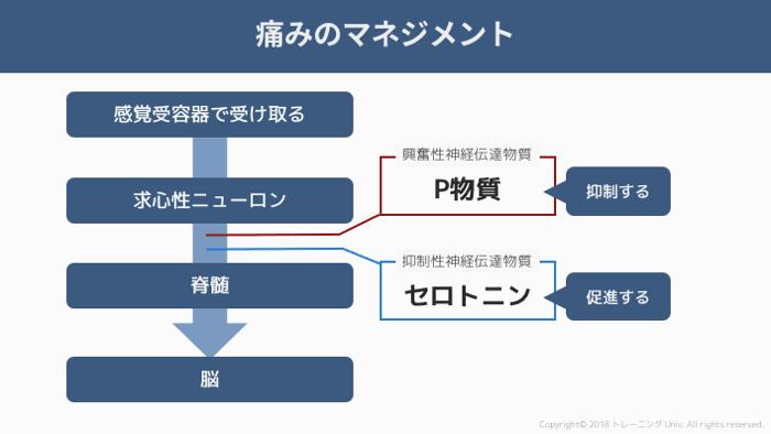 f:id:tatsuki_11_13:20181011025722p:image
