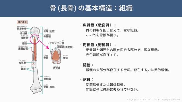 f:id:tatsuki_11_13:20181018071343p:image