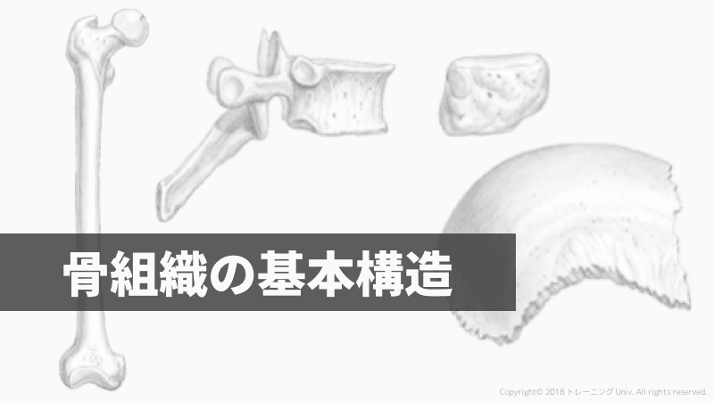 f:id:tatsuki_11_13:20181018071920p:plain