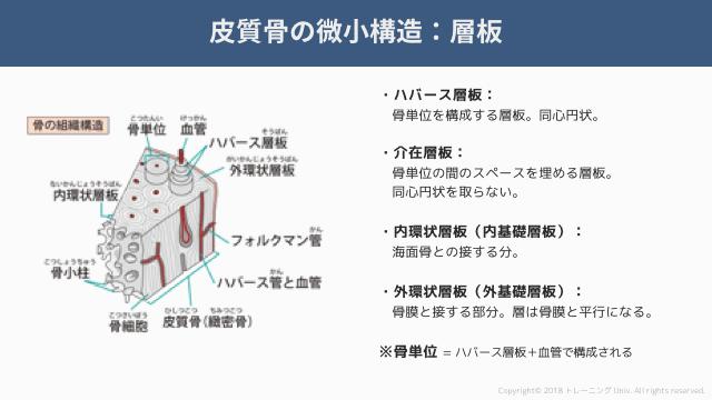 f:id:tatsuki_11_13:20181019014406p:image