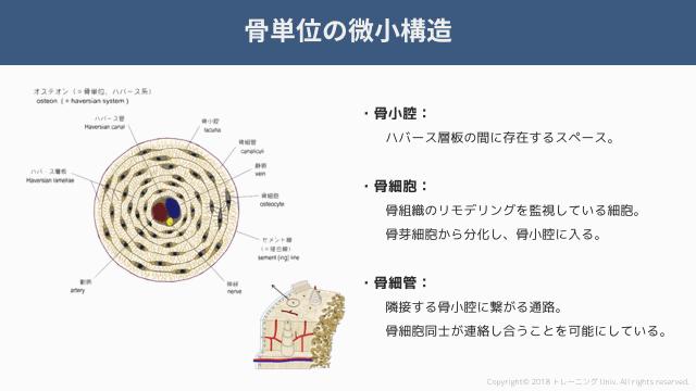 f:id:tatsuki_11_13:20181019014412p:image
