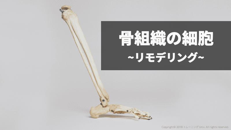 f:id:tatsuki_11_13:20181020235811p:image