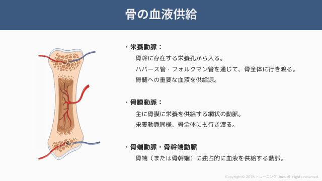 f:id:tatsuki_11_13:20181021004422p:image