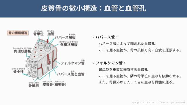 f:id:tatsuki_11_13:20181021004424p:image