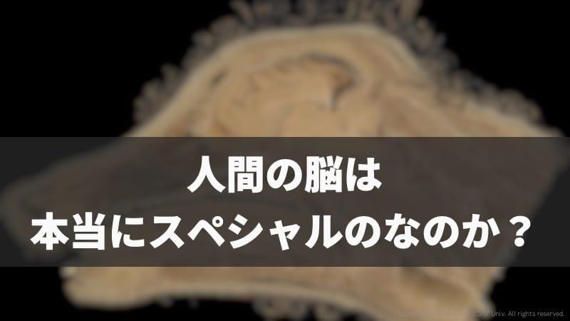 f:id:tatsuki_11_13:20190602071343j:image