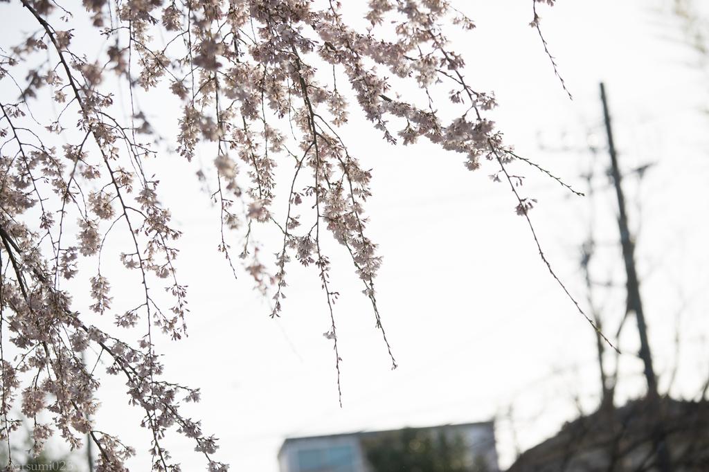 f:id:tatsumi023:20190322134857j:plain