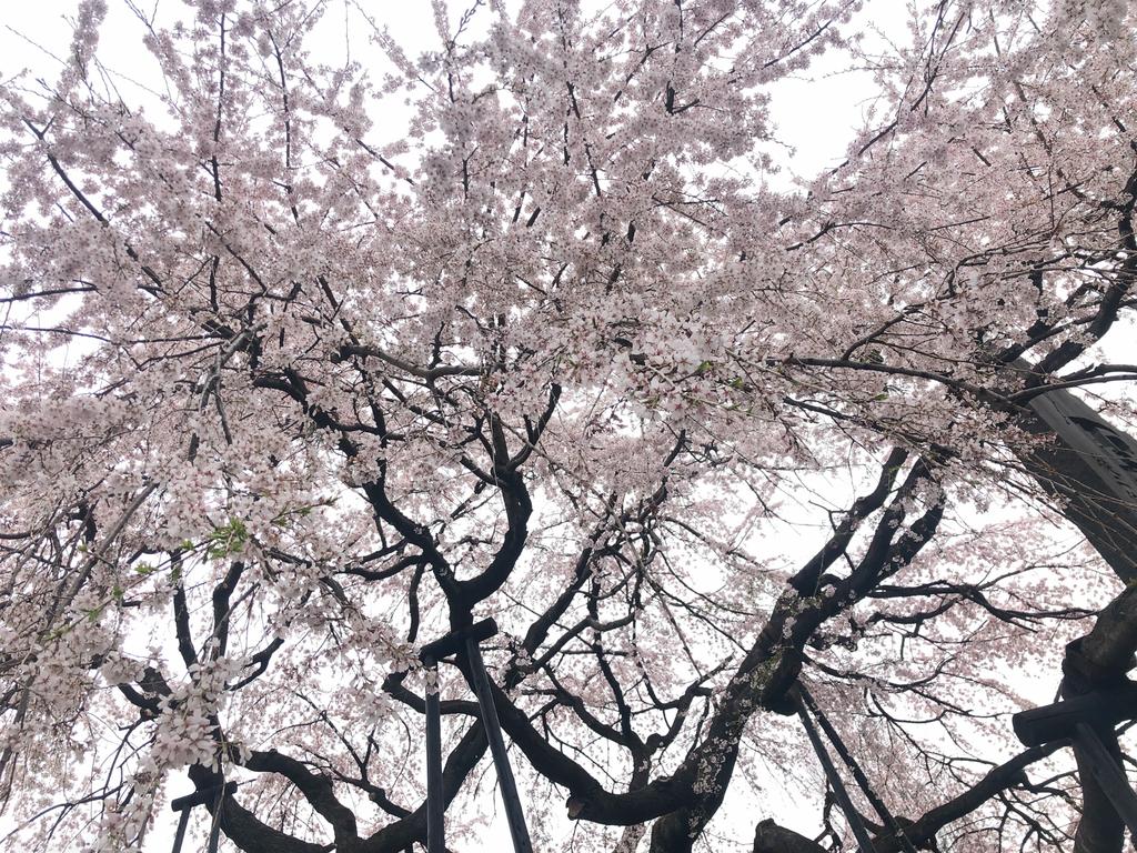 f:id:tatsumi023:20190326103056j:plain