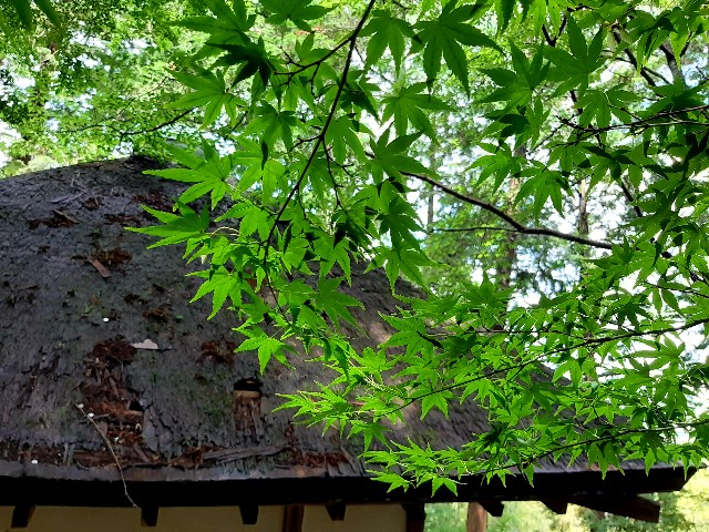 f:id:tatsumitatsu:20210620211116j:image