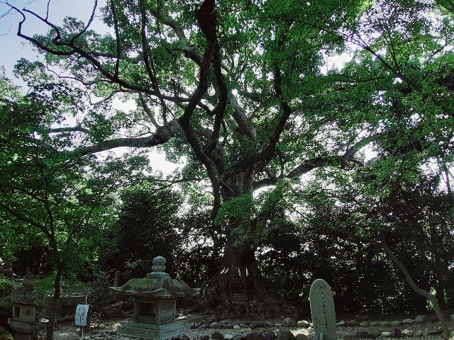 f:id:tatsumitatsu:20210731212923j:image