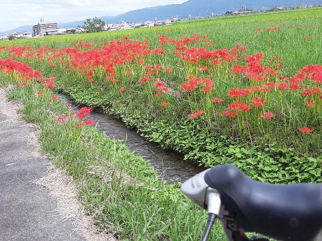 f:id:tatsumitatsu:20210920101957j:image