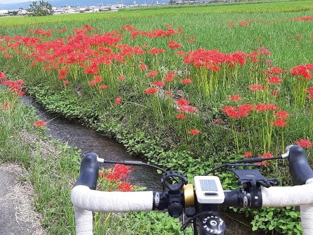f:id:tatsumitatsu:20210920102628j:image