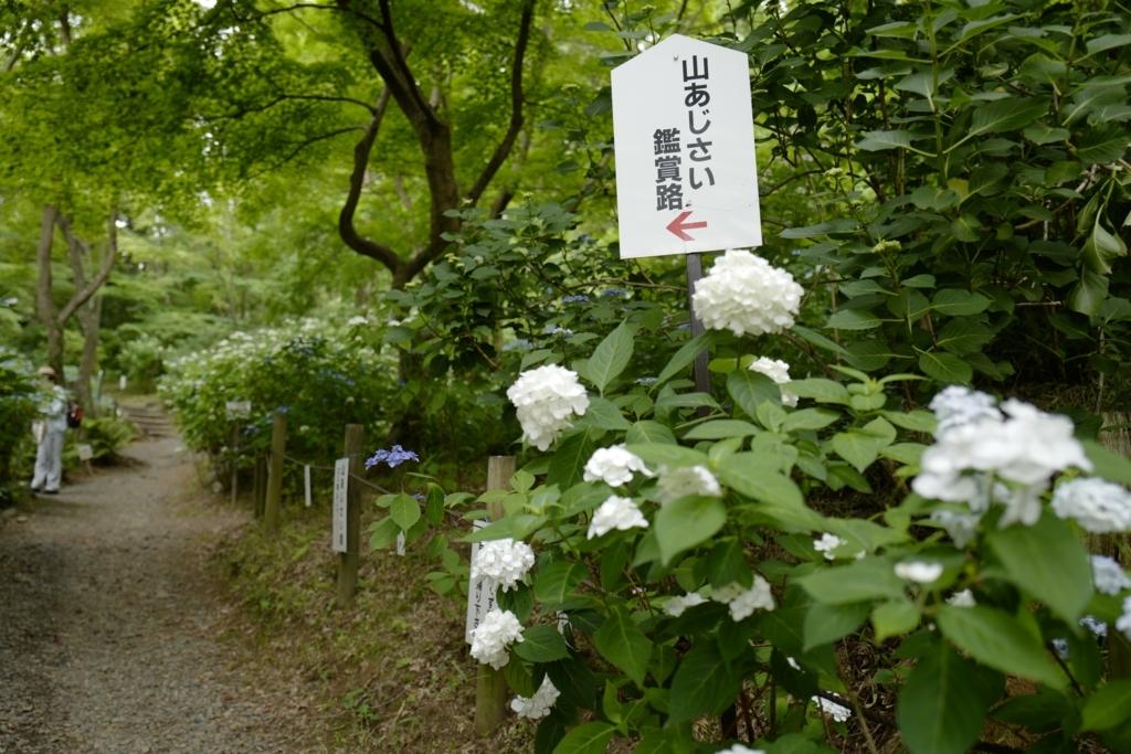 f:id:tatsumo77:20180531215113j:plain