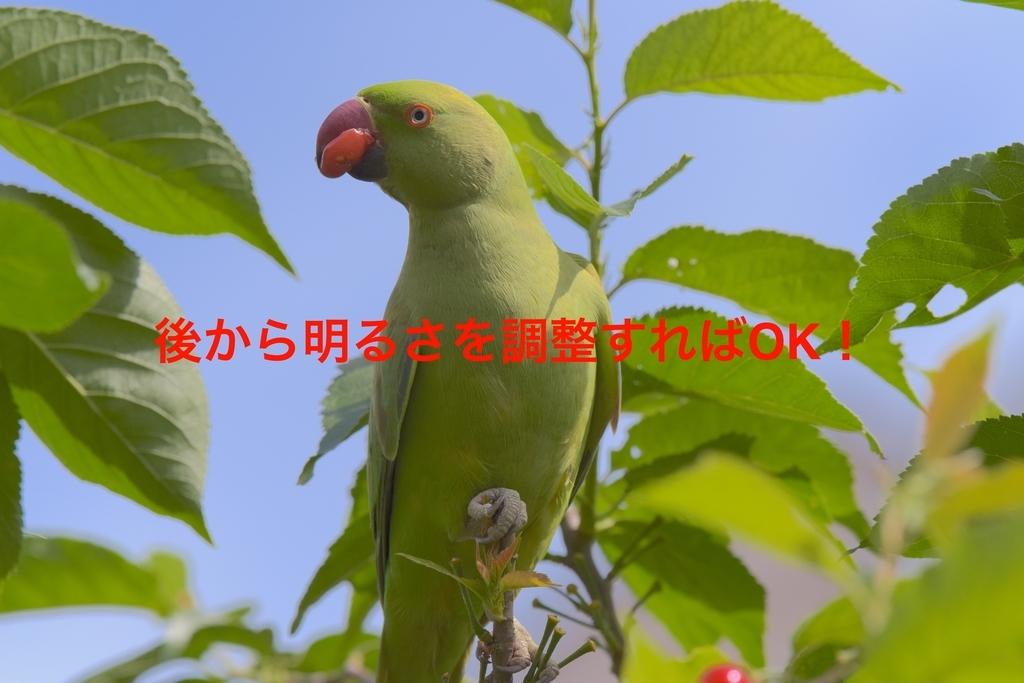 f:id:tatsumo77:20181007231400j:plain