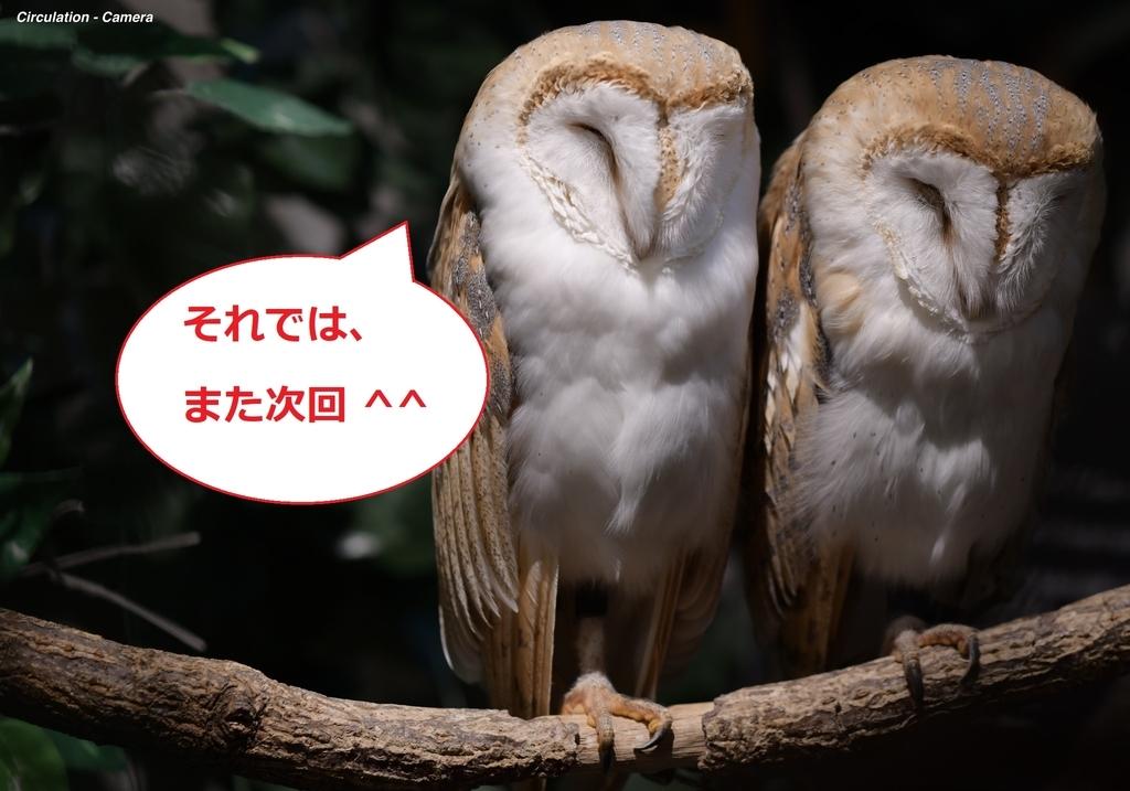 f:id:tatsumo77:20181120165748j:plain