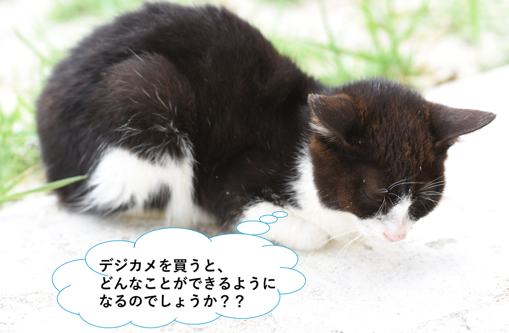 f:id:tatsumo77:20190202140731p:plain