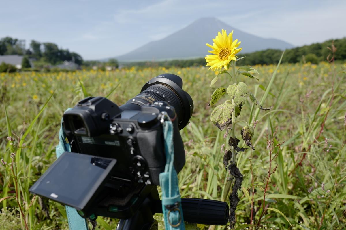 f:id:tatsumo77:20200818191122j:plain