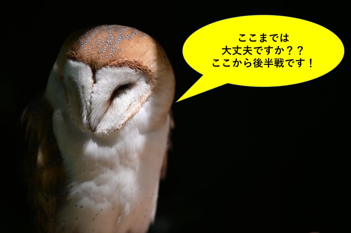 f:id:tatsumo77:20201119050949p:plain