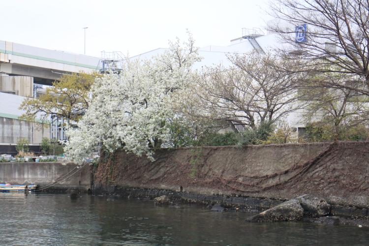 f:id:tatsunoko_yokohama:20190331084040j:plain